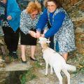 Etelvina e o borrego Sassá (Mourísia, 1987)