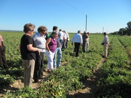 Muitos hectares de tomate